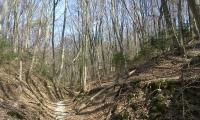 öszi erdő