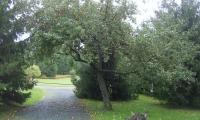bőralmafa
